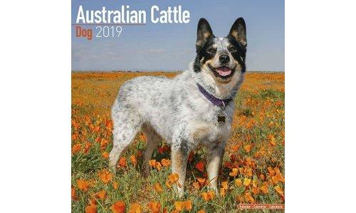 Australian Cattle Dog Kalenders 2019