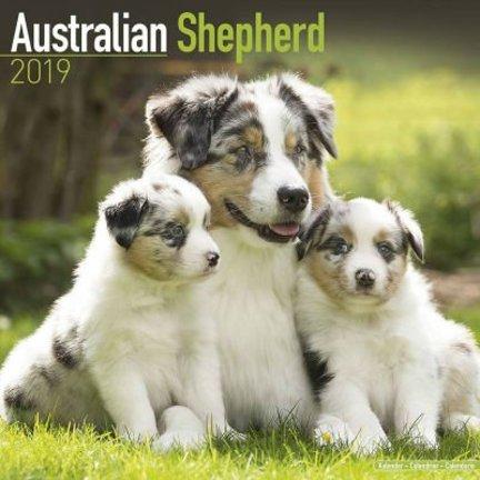 Australian Shepherd Kalenders 2019