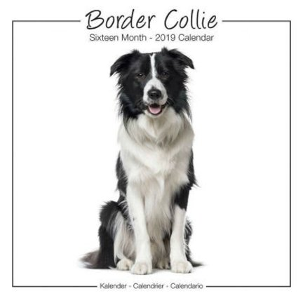 Border Collie Kalenders 2019