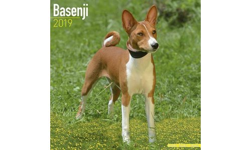Basenji Kalenders 2019