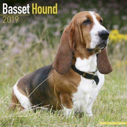 Basset Hound Kalenders 2019