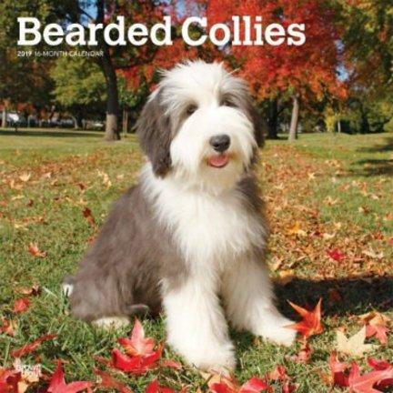 Bearded Collie Kalenders 2019