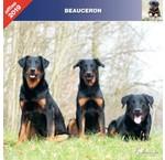 Beauceron Kalenders 2020
