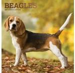 Beagle Kalenders 2020