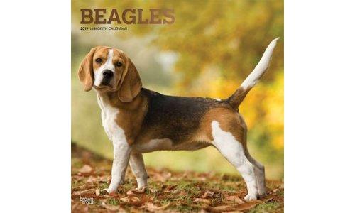 Beagle Kalenders 2019
