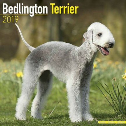 Bedlington Terrier Kalenders 2019