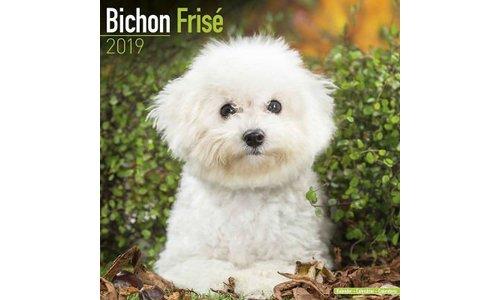 Bichon Frise Kalenders 2019