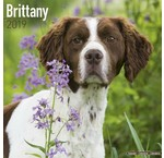 Brittany Spaniel Kalenders 2019