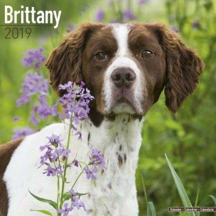 Brittany Spaniel Kalenders