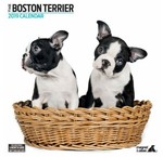 Boston Terrier Kalenders 2020