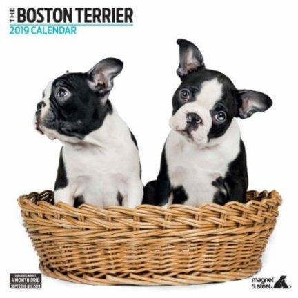 Boston Terrier Kalenders 2019