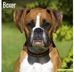 Boxer Kalenders 2020