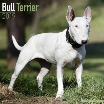 Bull Terrier Kalenders 2019