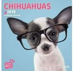 Chihuahua Kalenders 2020