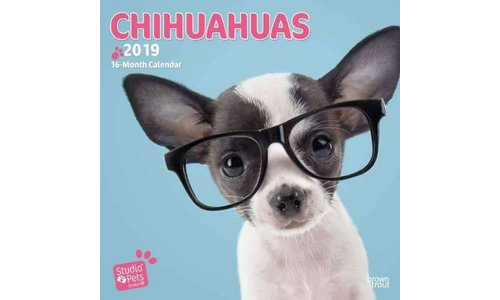Chihuahua Kalenders 2019