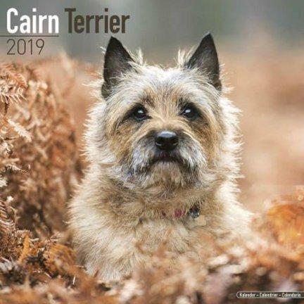 Cairn Terrier Kalenders 2019