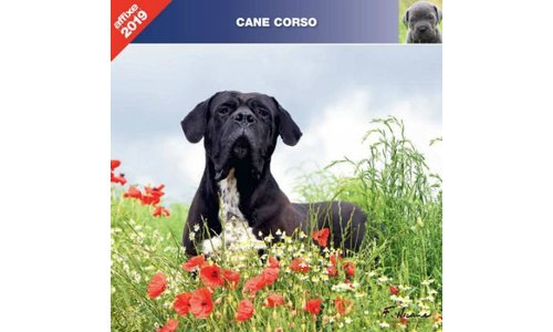 Cane Corso Kalenders 2019
