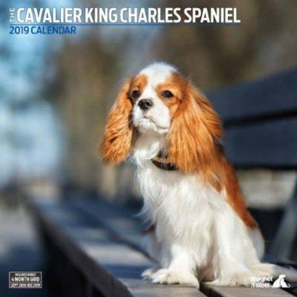 Cavalier King Charles Spaniel Kalenders 2019