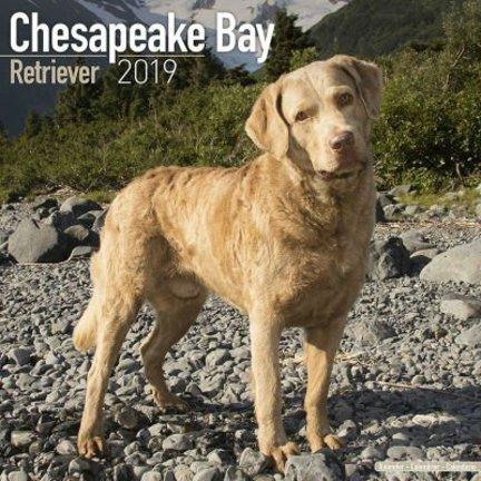 Chesapeake Bay Retriever Kalenders 2019