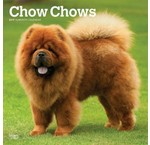 Chow Chow Kalenders 2019
