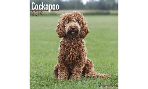 Cockapoo Kalenders 2019