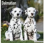 Dalmatier Kalenders 2020