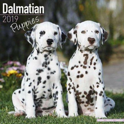 Dalmatier Kalenders 2019