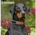 Dobermann Kalenders 2020