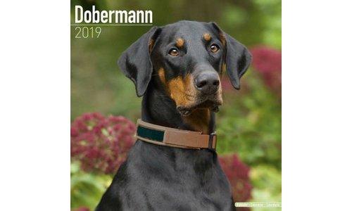 Dobermann Kalenders 2019
