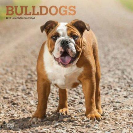 Engelse Bulldog Kalenders 2019