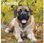 Engelse Mastiff Kalenders 2019