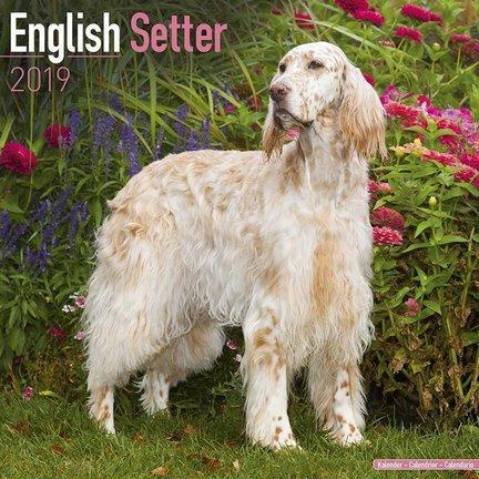 Engelse Setter Kalenders 2019