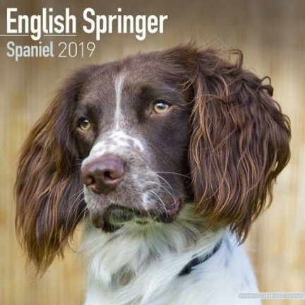 Engelse Springer Spaniel Kalenders 2019
