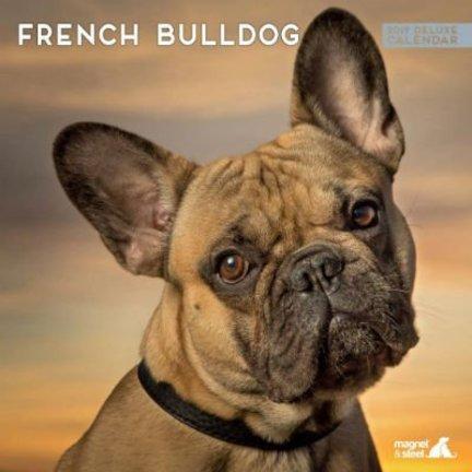 Franse Bulldog Kalenders 2019
