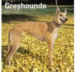 Greyhound Kalenders 2019