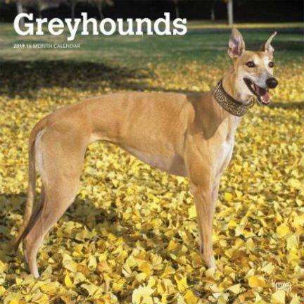 Calendriers Greyhound