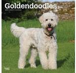 Goldendoodle Calendars