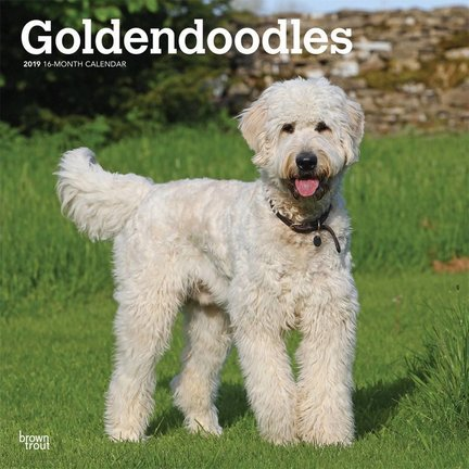 Goldendoodle Calendriers