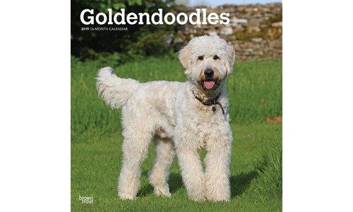 Goldendoodle Kalenders 2019