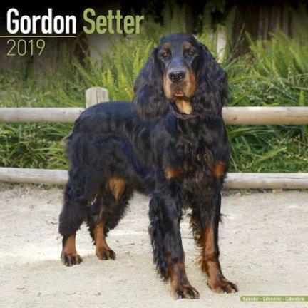 Gordon Setter Calendriers
