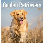 Golden Retriever Kalender
