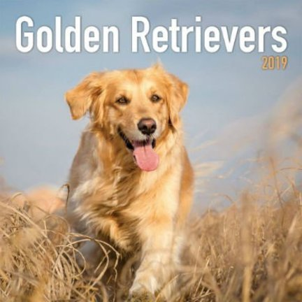 Golden Retriever Kalenders 2019
