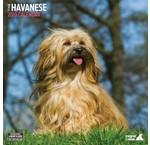 Havanezer Kalenders