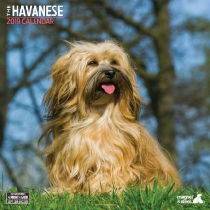Havanese Calendars