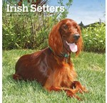 Irish Setter Calendars