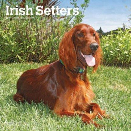 Irish Setter Kalender