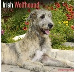 Ierse Wolfshond Kalenders