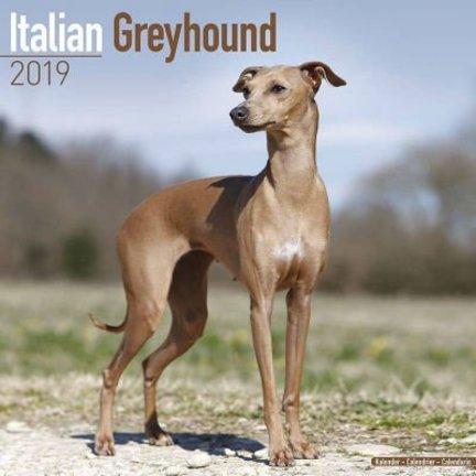 Italienischer Windhund Kalender