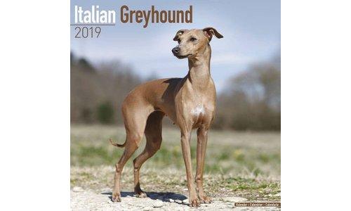 Italian Greyhound Kalenders 2019