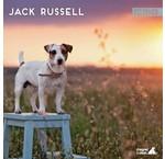 Jack Russell Terrier Kalenders